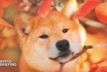 Photo of American Cancer Society Accepts Dogecoin Donations