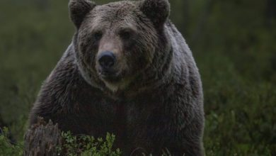 Photo of Bitcoin bears are on life support, says analyst as BTC holds above $60K